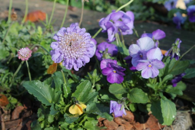 Preparing Your Winter Annuals Gibbs Gardens