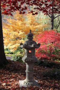 Colorful Japanese Maples at Gibbs Gardens